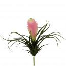 Succulent, flowering, H26cm, green-pink